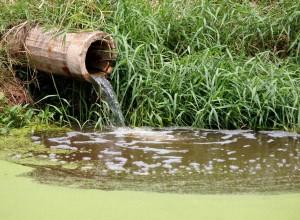 septic service drain service